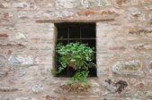 Window with plant. — Stock Photo