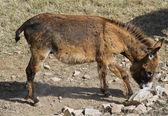 Donkey. — Stock Photo