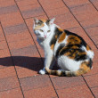 Cat on tile roof. - Stock Photo