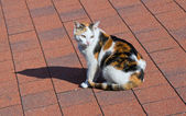 Cat on tile roof. — Stock Photo