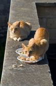 Ginger cats. — Stock Photo