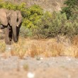Elephants in the Skeleton Coast Desert — Stock Photo