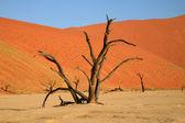 Dead tree in Sossusvlei — Stock Photo