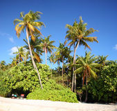 Coconut tree in the paradise — Stock Photo