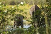 Grupo de elefantes en la selva — Foto de Stock
