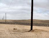 Piloni del telefono in namibia — Foto Stock