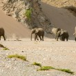 Stock Photo: Skeleton Coast and elephants