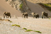 Skeleton Coast and elephants — Stock Photo