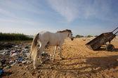 White horsehead with rubbish — Stock fotografie