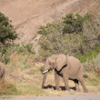 Group of Elephants — Lizenzfreies Foto
