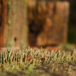 Moss on stub — Stock Photo