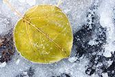 List stromu v ledu — Stock fotografie