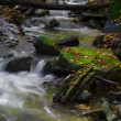 Babbling Brook — Stock Photo