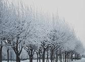 Winter, beautiful trees — Stock Photo