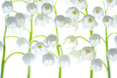 Lilies of the Valley. — Stock Photo