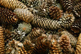 Fondo del cono de pino — Foto de Stock