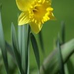 Spring — Stock Photo #4604133