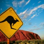 Kangaroo Ayers Rock — Stock Photo