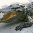 Thailand crocodile - Stock Photo