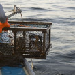Lobster Trap — Stock Photo #4451578