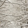 Stock Photo: Frozen Branches