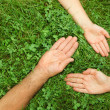 Stock Photo: Three hands in grass