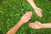 Three hands in grass — Stock Photo