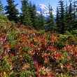 High Mountain in fall meadow facing a snow-capped mountain - Stock Photo