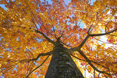 Autumn elm tree with the sky above — Stock Photo