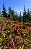 High Mountain in fall meadow facing a snow-capped mountain — Stock Photo