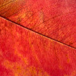 Stock Photo: Autumn leaf macro
