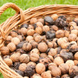 Bunh of wallnuts - Stock Photo