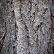 Tree bark texture of an old pine — Stockfoto