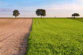 Fields with trees and walker, Pfalz, Germany — Stock Photo