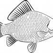 Stock Vector: The big crucian