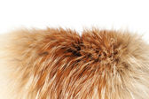 Fox winter fur close-up #2 | Isolated — Stock Photo