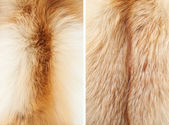 Fox winter fur close-up #3. Neck and back | Textures — Stock Photo