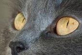 Felint ögon — Stockfoto