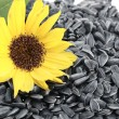 Sunflower seeds — Stock Photo #4227120