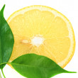 Royalty-Free Stock Photo: Fresh Lemon closeup.