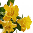 Three yellow roses isolated on the white background — Stock Photo