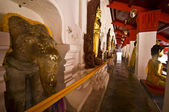 Holy elephant — Stock Photo