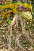 Drzewo bodhi — Zdjęcie stockowe