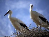 Storks in the nest against a blue sky — Stock Photo
