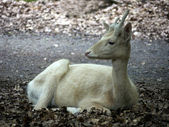 White hind-sight to the left — Stock Photo