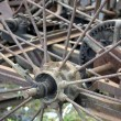 Wheel of an old agricultural machine — Stock Photo