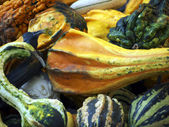 Ornamental gourds-curved — Stock Photo