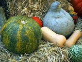 Pumpkins on bales — Stock Photo