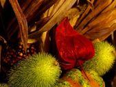 Flower of pumpkin — Stock Photo