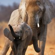 Elephant baby — Stock Photo
